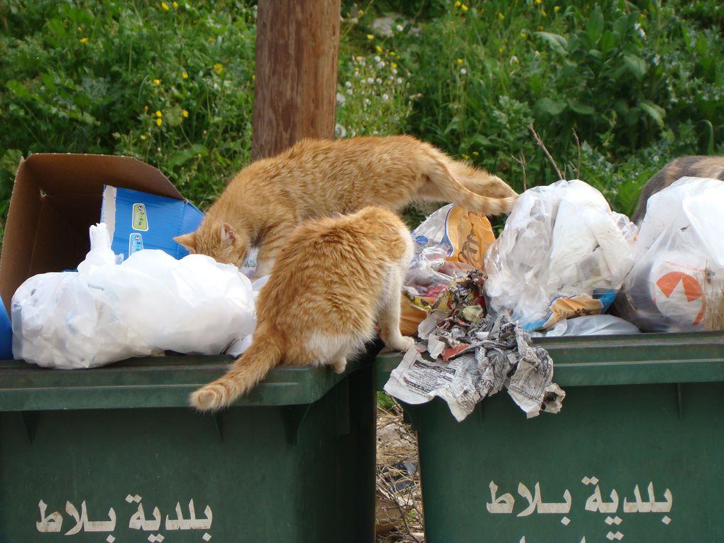 Le Liban dans toute sa diversité...