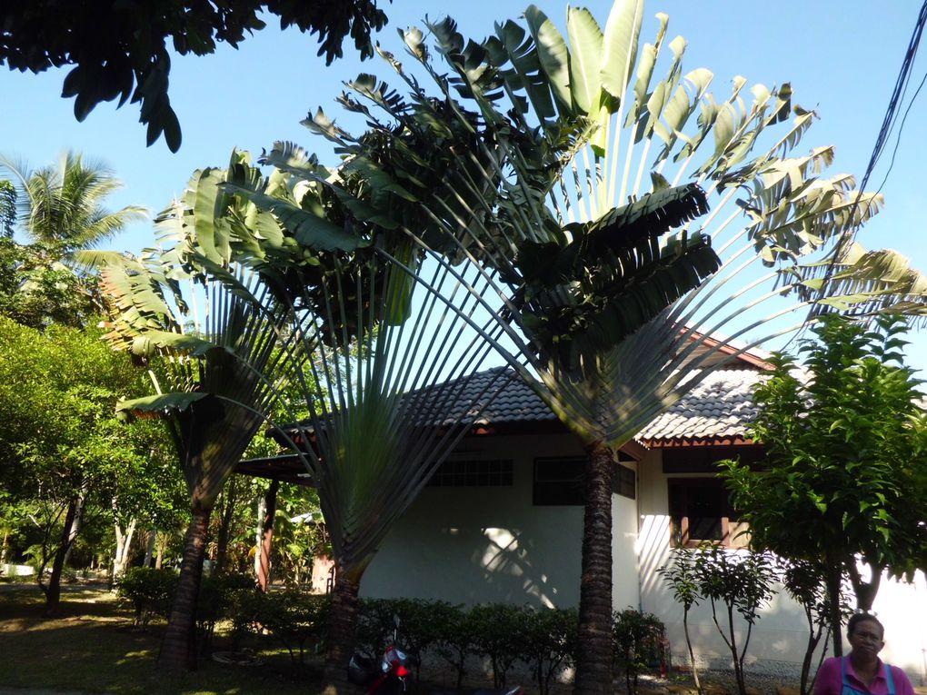 La bellissima Koh Phangan, l'isola di cui ci siamo innamorati!