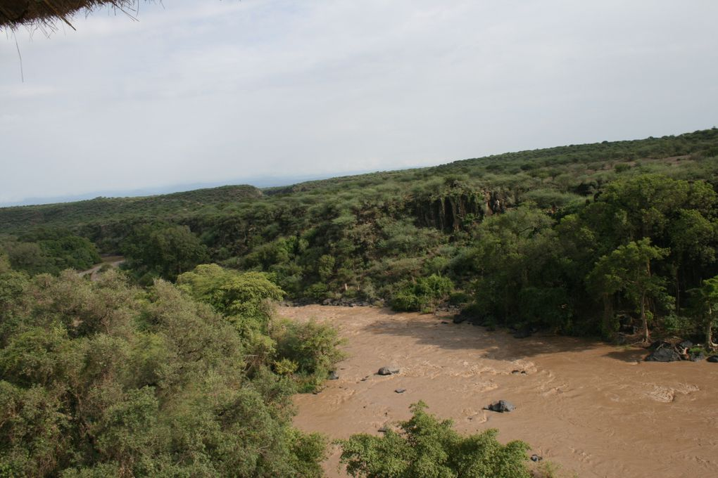 Awash National Park, Rift Valley, East Ethiopia. Fauna and Flora around the park and the Awash river.