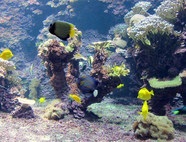 Album - Zoo, parcs animaliers et aquariums