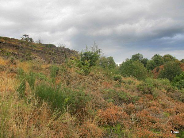 Mes balades dans la forêt mythique de Brocéliande