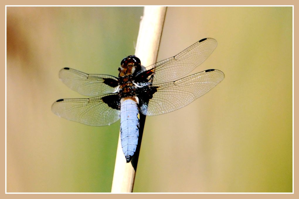 Album - La-Brenne.Insectes