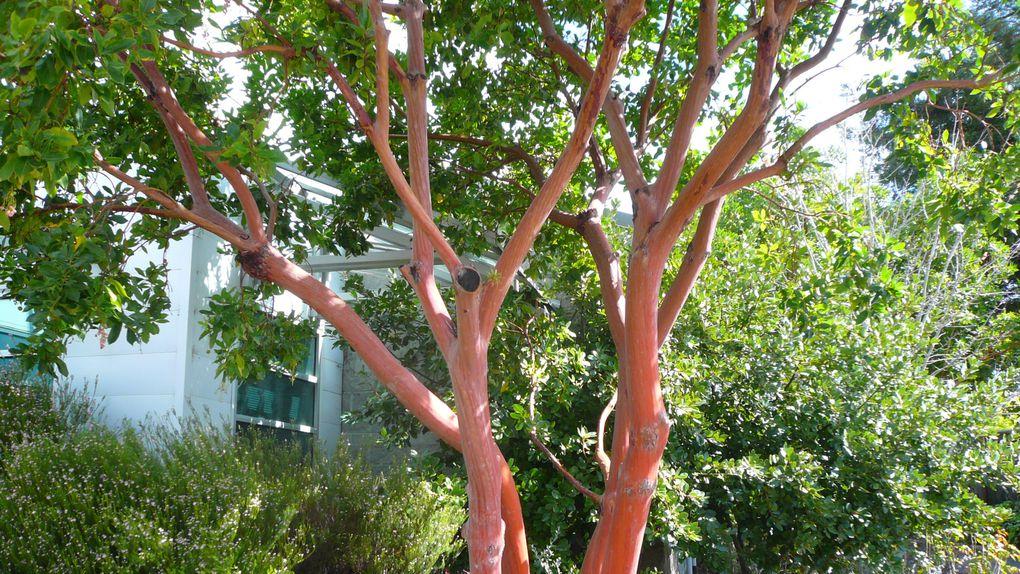 Album - arbres