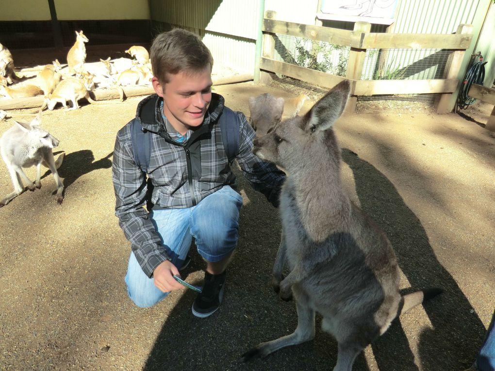 Am 11.09 gings einen Tag in die Blue Mountains westlich von Sydney
