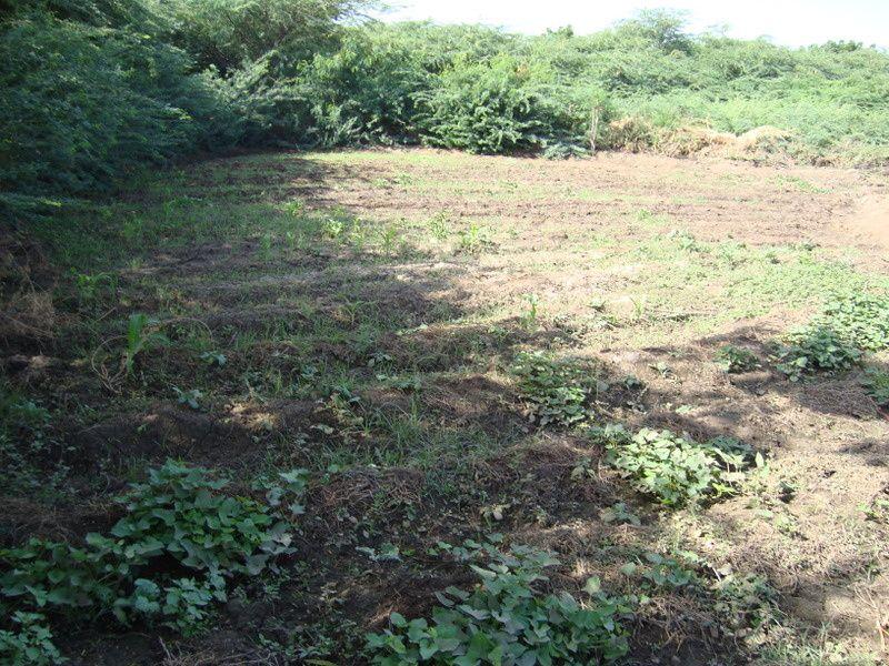 Album - Small-irigation-crops-farm