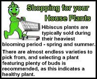 House Plants from G to J