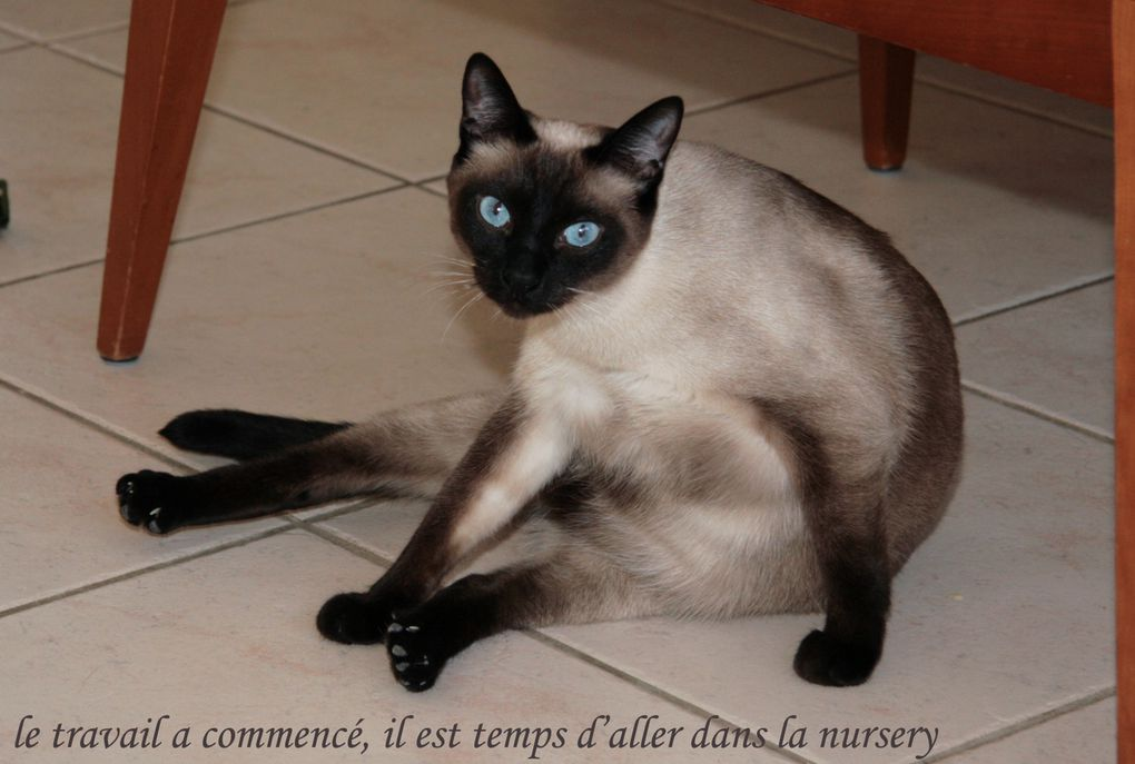 Album - Chatterie-de-la-Petite-Combe