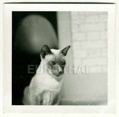 Album - Les-chats-Vintage