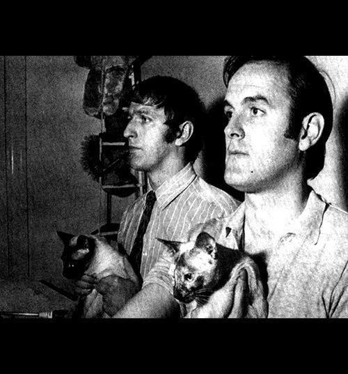Album - les siamois et les stars, quatrième partie