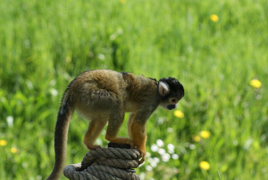 j'ai pris ces photos au parc de la Tête d'Or à Lyon. J'adore la nature et j'ai passé un moment magique à photographier toutes ces espèces animales dont certaines d'entre elles font partie des espèces menacées de disparition.