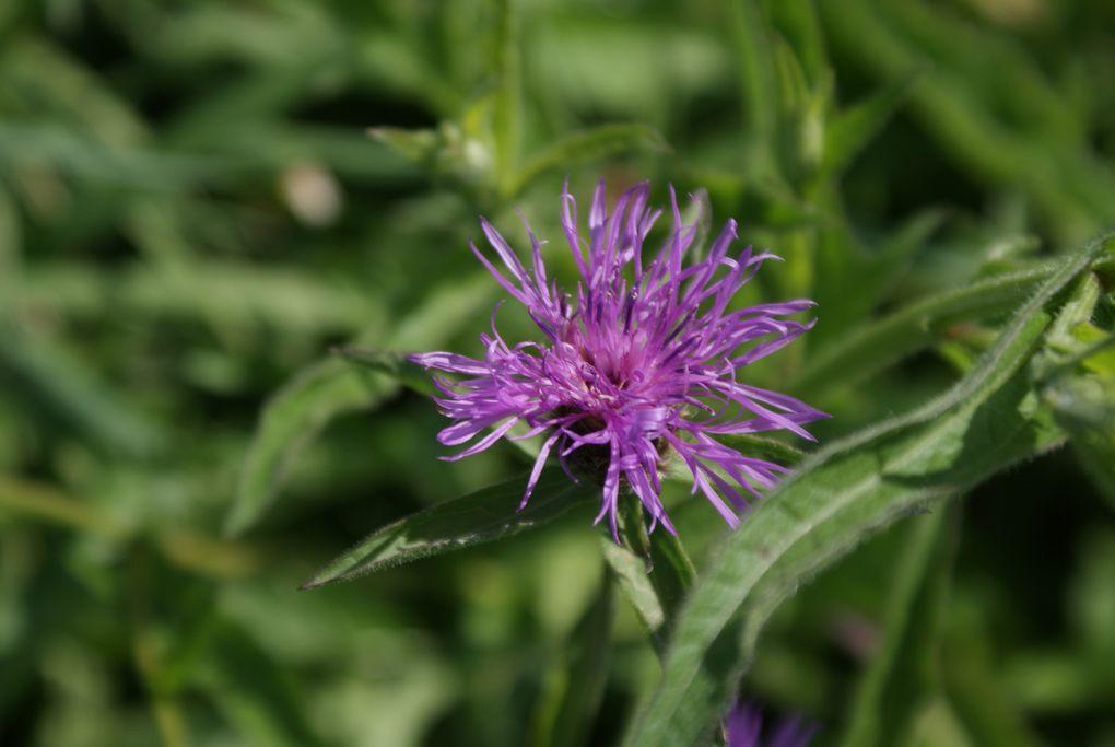 le monde des fleurs est rempli de couleurs et de poésie. Vous verrez des fleurs de montagne, des fleurs de bords de chemins, des fleurs de nos jardins, etc....