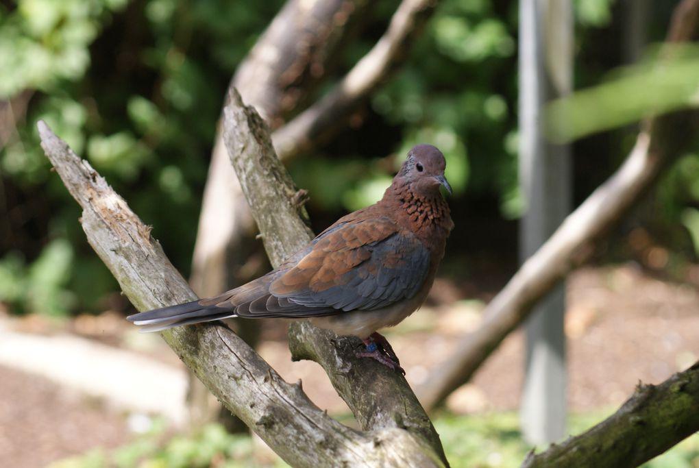 Album - le-parc-des-oiseaux