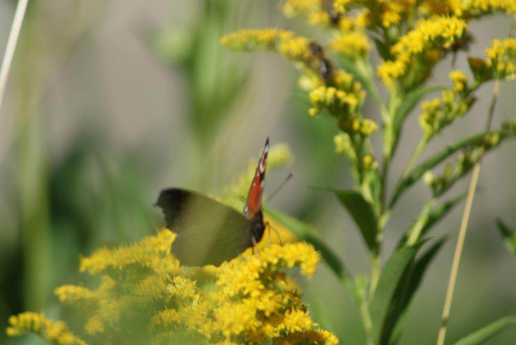 vous avez déjà vu le film microcosmos avec le petit monde qui vit au ras du sol : les insectes et autres tout petits êtres vivants. Je vous propose quelques photos avec ce petit monde que l'on a toujours tendance à mépriser.
