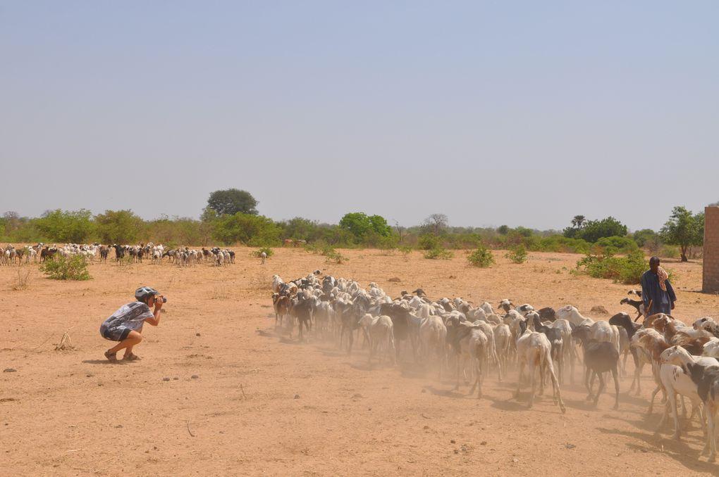 Album - album-photo-Senegal