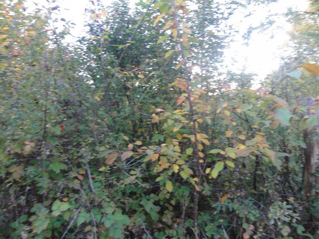 Les couleurs de l'automne dans la campagne