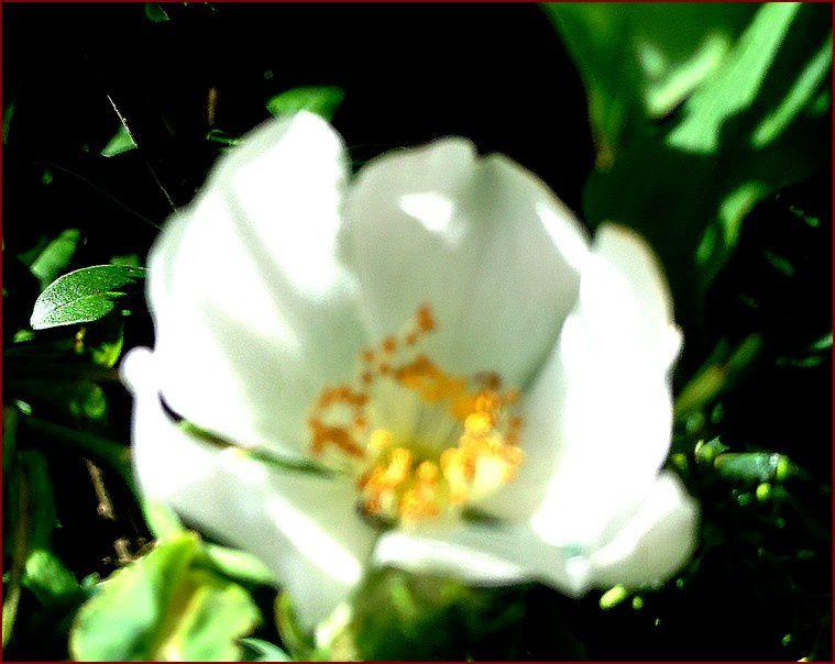 Album - Floraison Printemps - 2