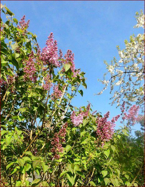 Album - Floraison-printemps