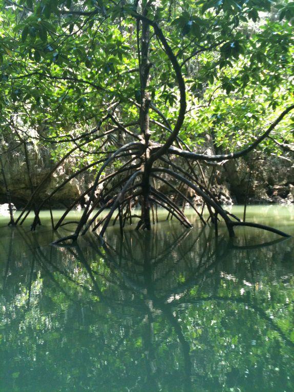 Krabi, Phang Nga, Tup Island, Emrald Pool...