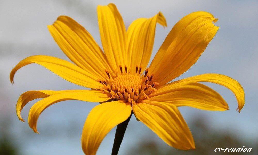 Photos perso des Fleurs observées sur l'île.