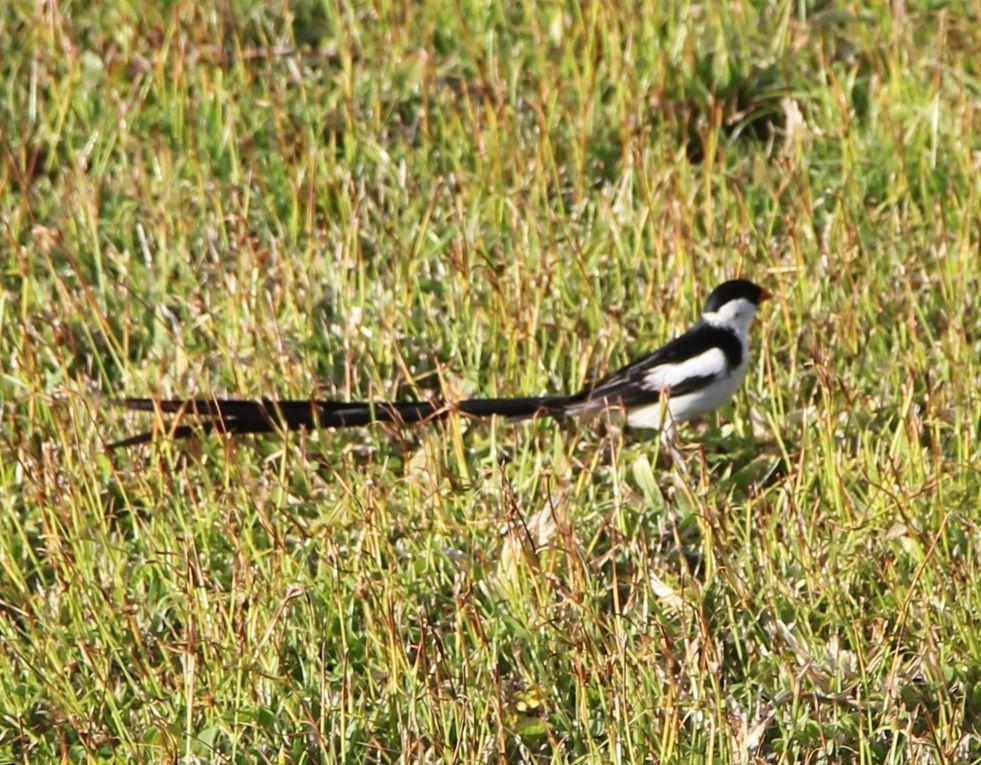 Photos perso des oiseaux observés sur l'île
