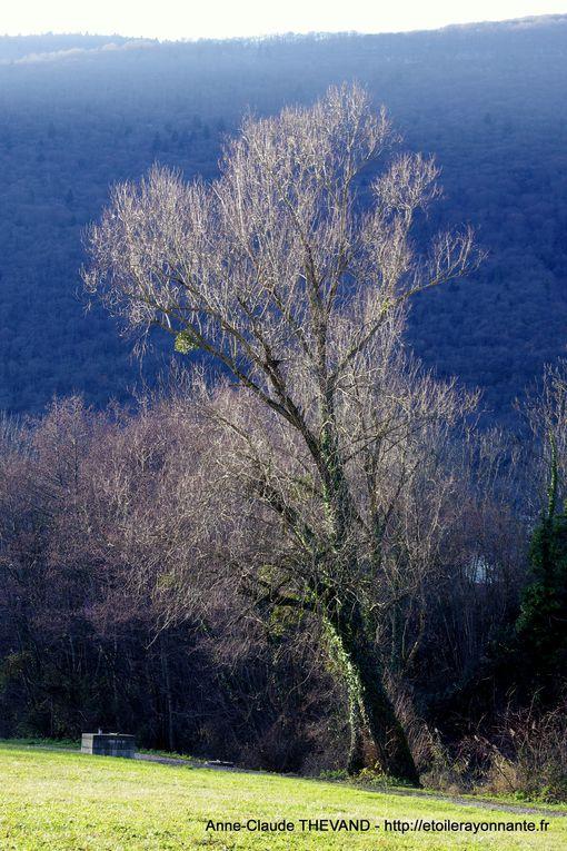L'hiver a mis son manteau blanc et les arbres sont dénudés.