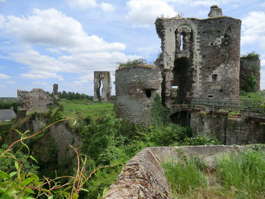 L'Angevine s'installe vers la terrasse de la Boire en recherchant la végétation de la prairie où l'Angevine monte vers le château de Gilles de Rais