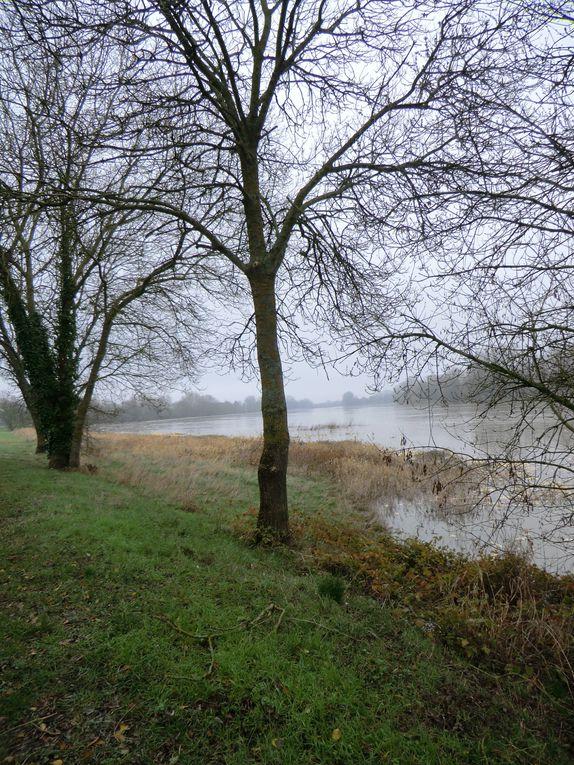 Dans le sillage de la Loire,l'Angevine va à la recontre de l'Authion où je découvre des champignonnières et végétations hivernales....