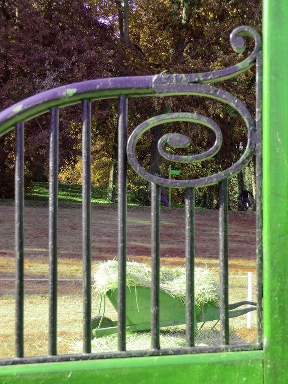 En parcourant les obstacles à l'hippodrome du Le Lion d'Angers,l'Angevine installe sa palette de couleurs où grâce aux pinceaux de son APN,l'Angevine joue avec les couleurs,l'Angevine se prend pour une jument en dormant dans sa chaumière....
