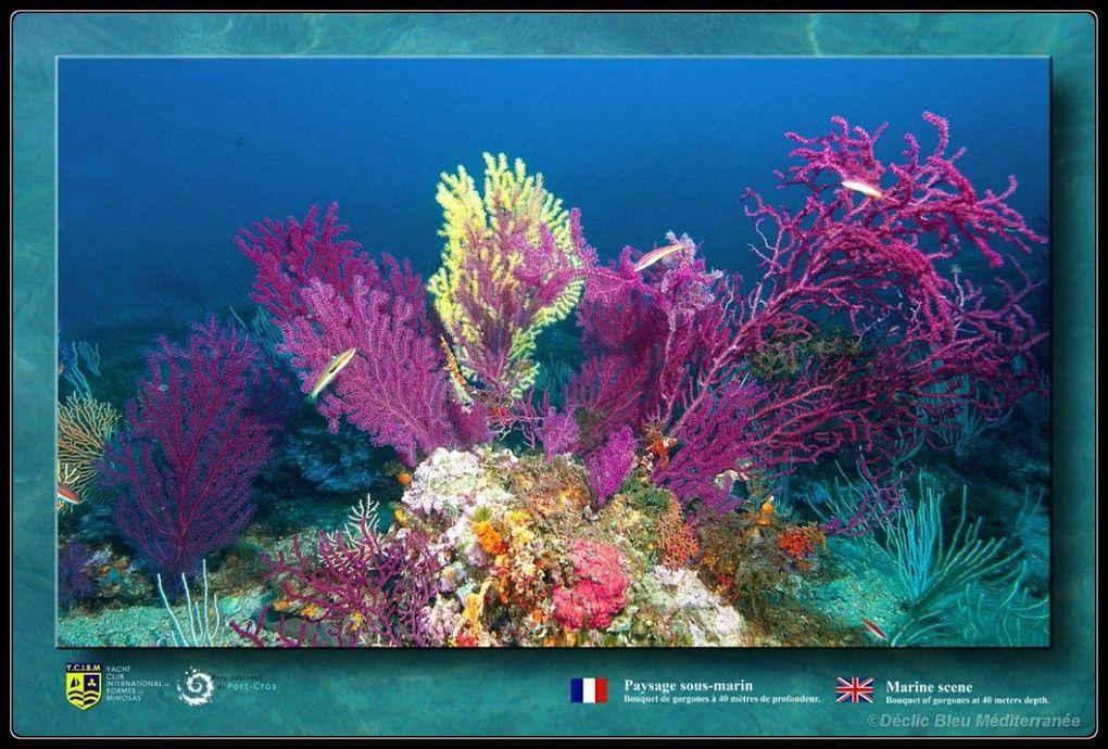 Exposition créée par Déclic Bleu Méditerranée pour le port de Bormes les Mimosas.En association avec le Yacht Club de Bormes et la mairie.