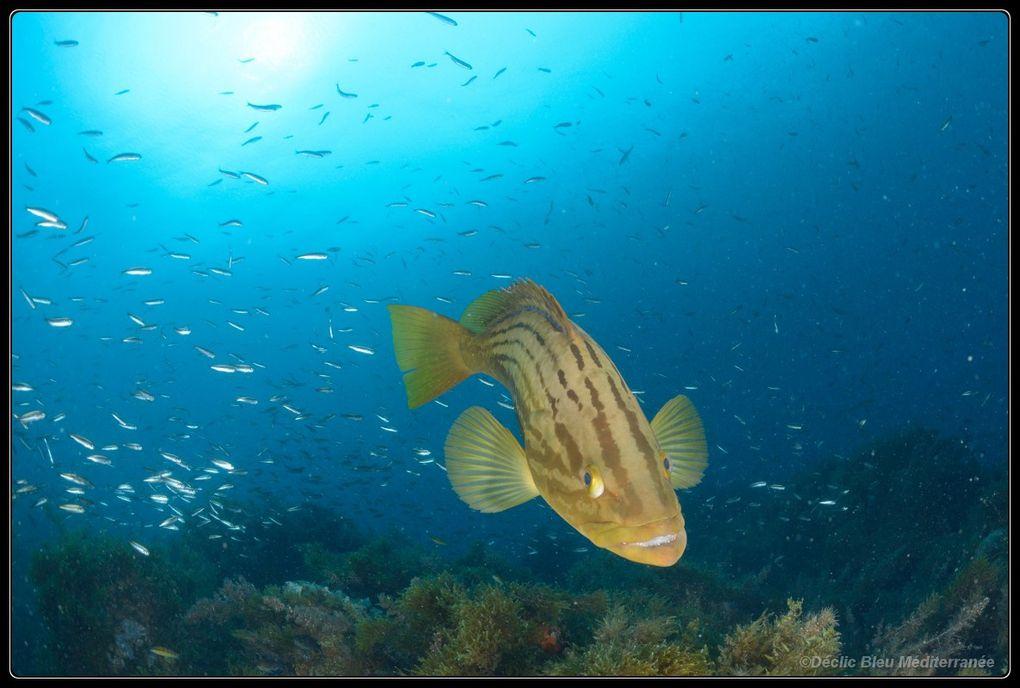 Photos sous-marines prises dans une réserve sous-marine en Espagne devant Cabo de PalosIn Spain, Cabo de Palos, pictures of a marine protected area.