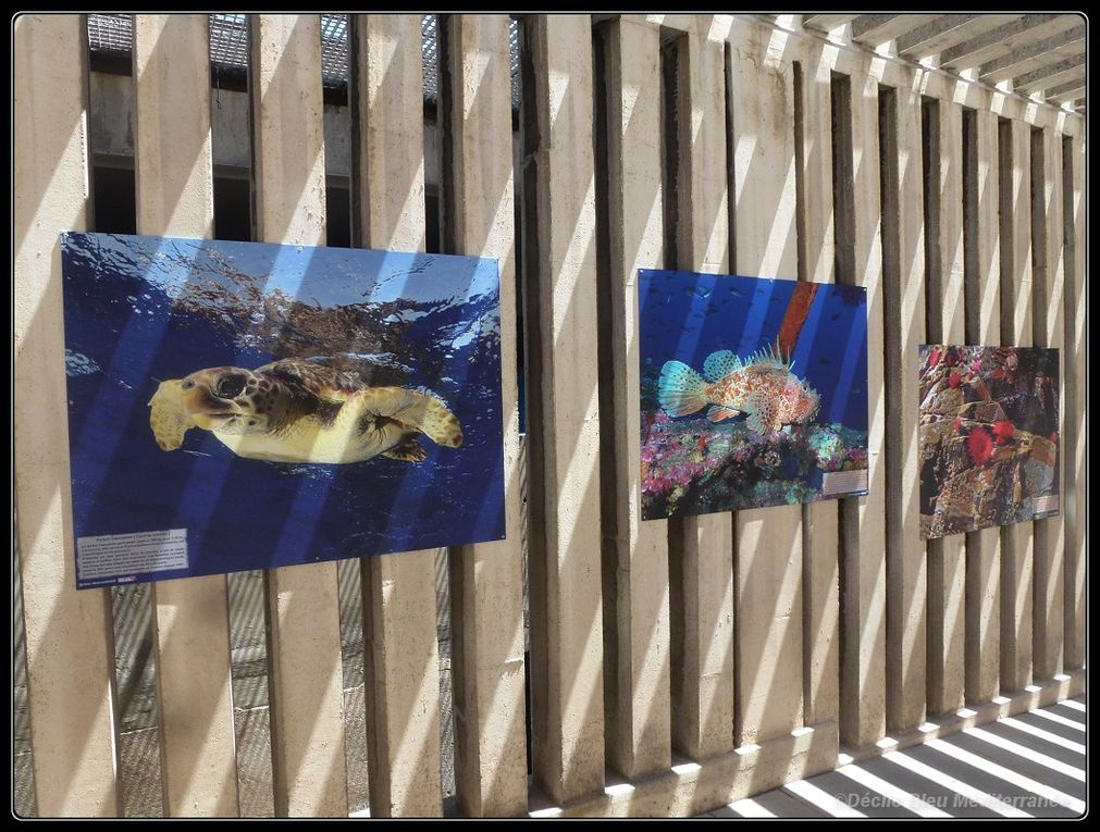 "Another ""in the street"" exhibition of under water photographs, by Déclic Bleu Méditerranée."