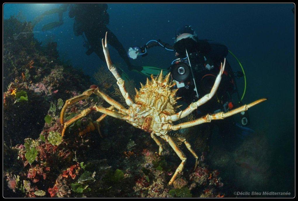 Images d'une plongée au cap Roux avec le club de la Rague.