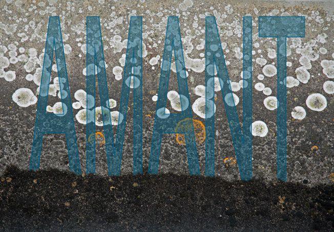Album - Lichens
