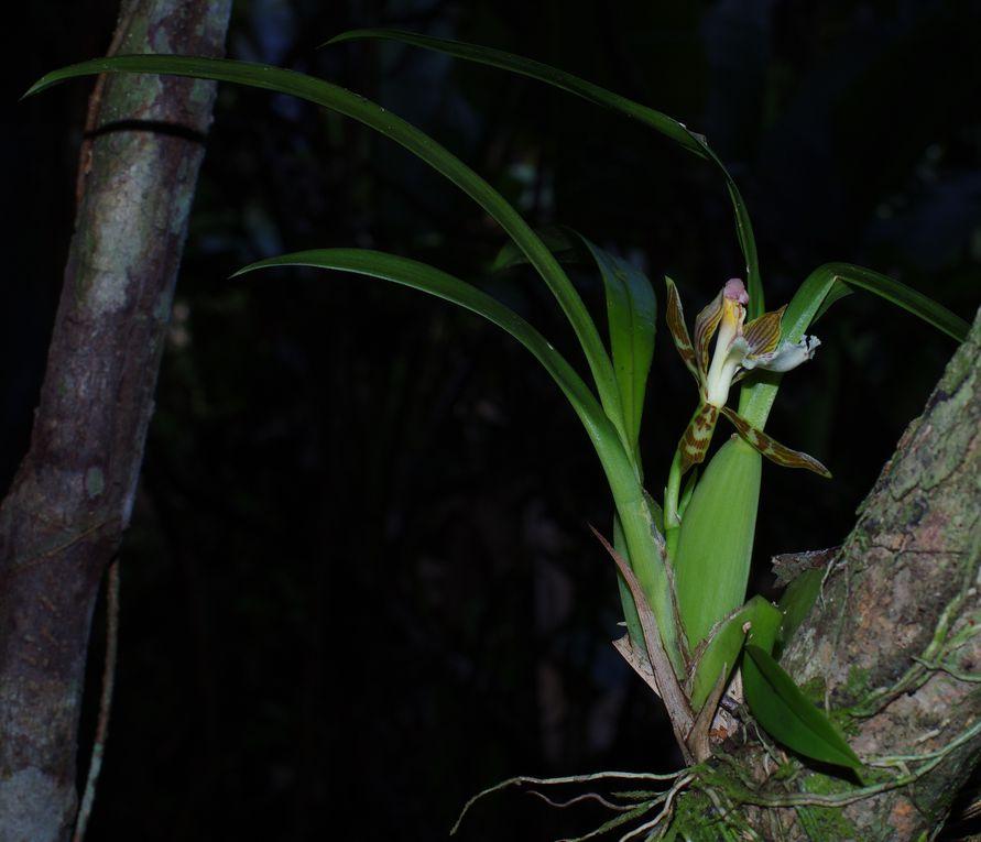 forêt lisière savane des Pères, Kourou - 6 février 2013