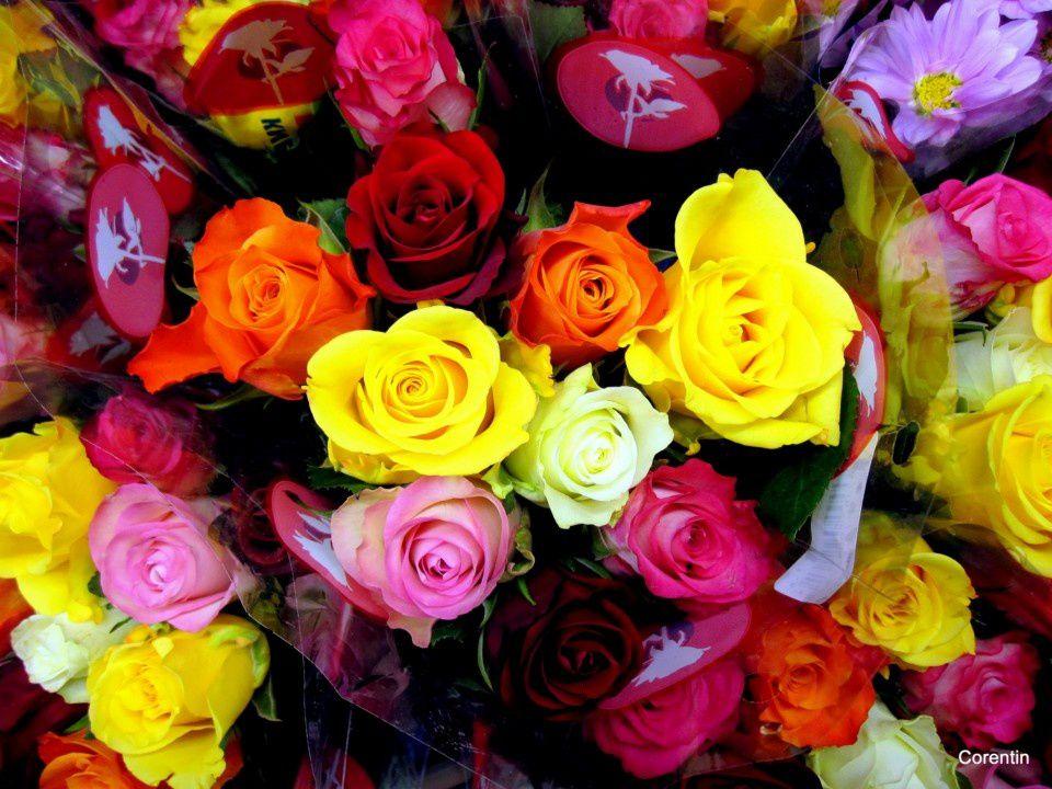 Album - Des-fleurs