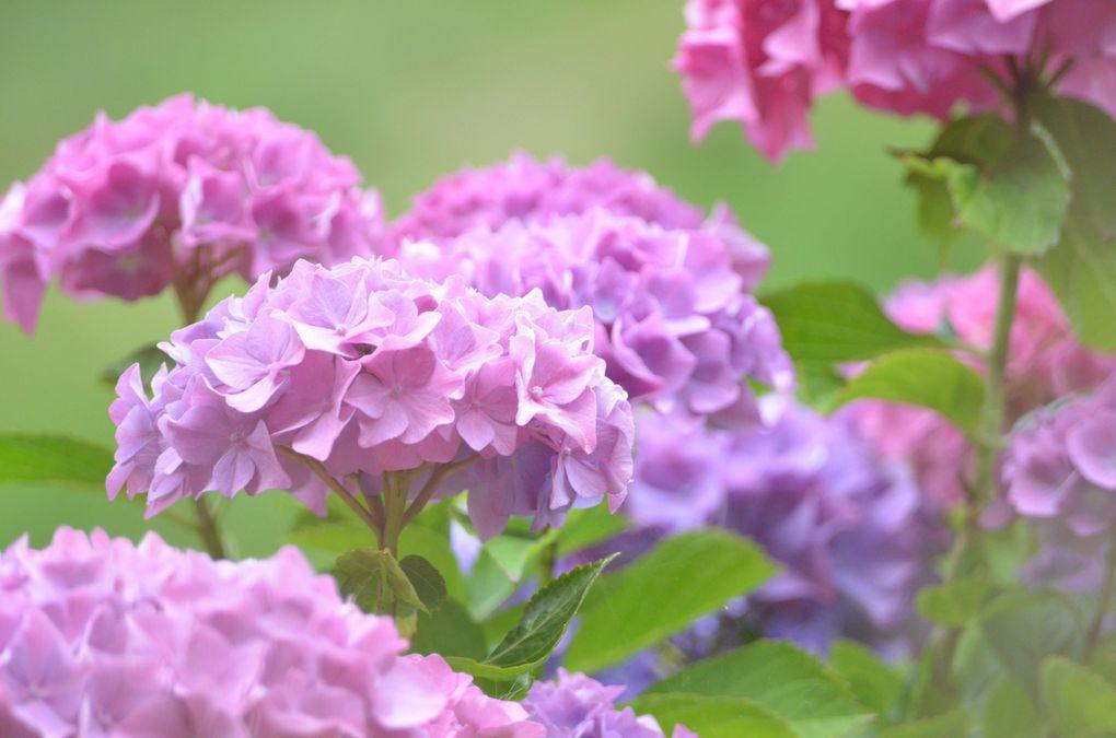Album - Photos-de-fleurs