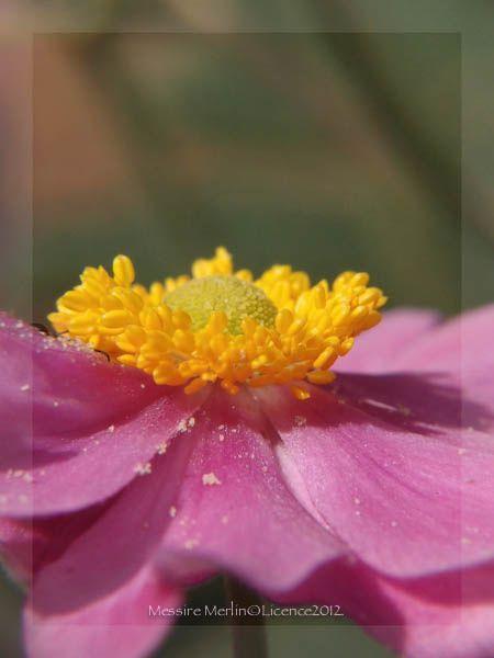 Album - Fleurs-de-jardin
