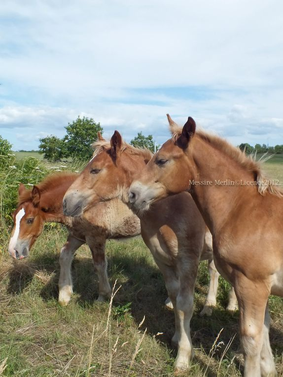 Album - Photos-anes--chevaux-