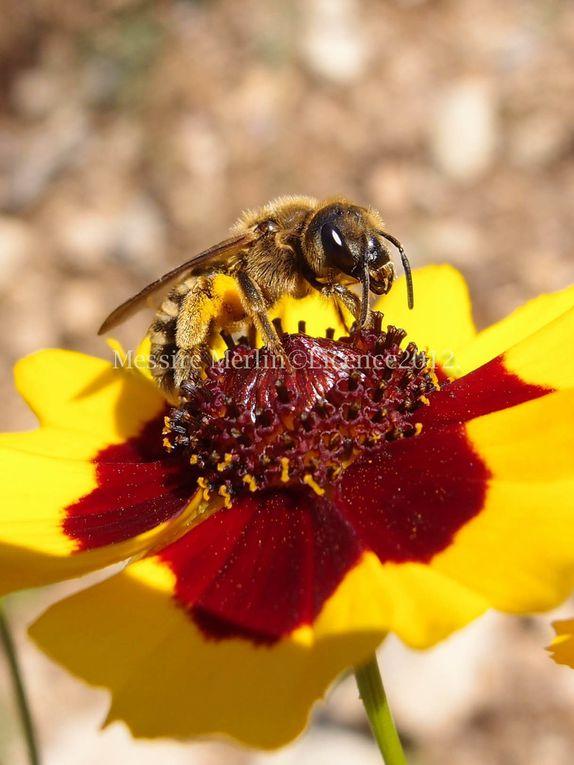 Album - Photos-insectes