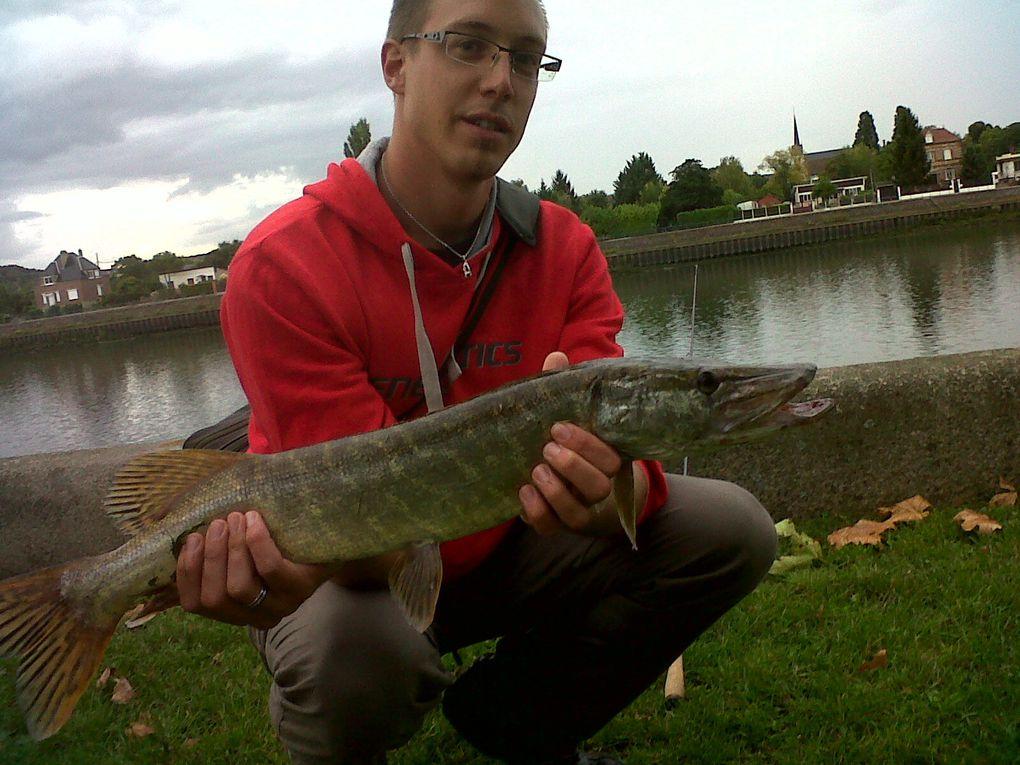 poissons des diffèrentes sorties de 2011