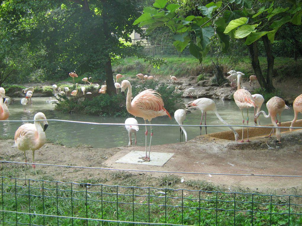 Album - Parco-Natura-Viva