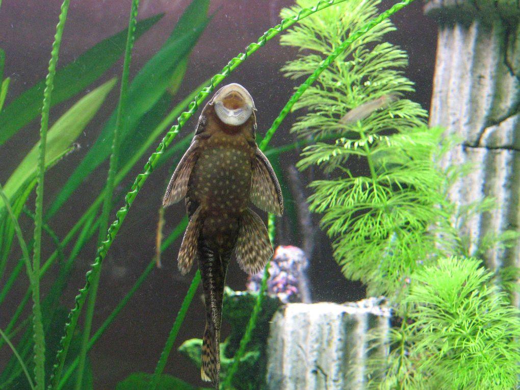 pesci e piante del mio acquario