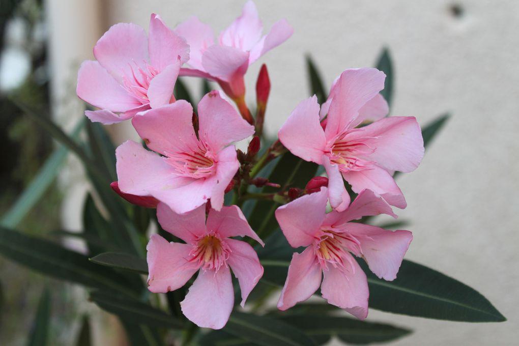 Les fleurs de Bormes les Mimosas... et du jardin