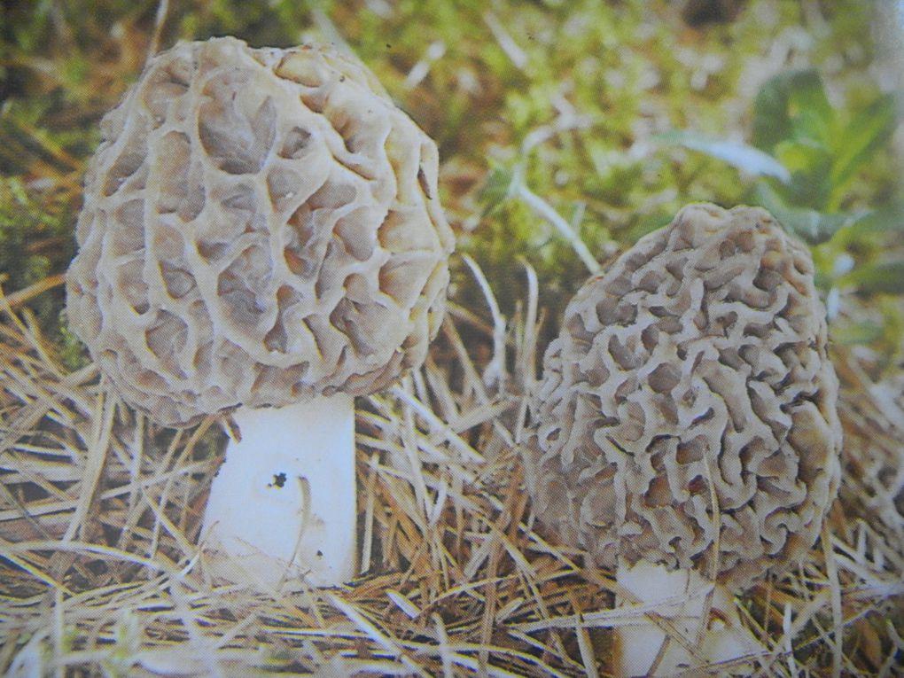 Album - Les-champignons
