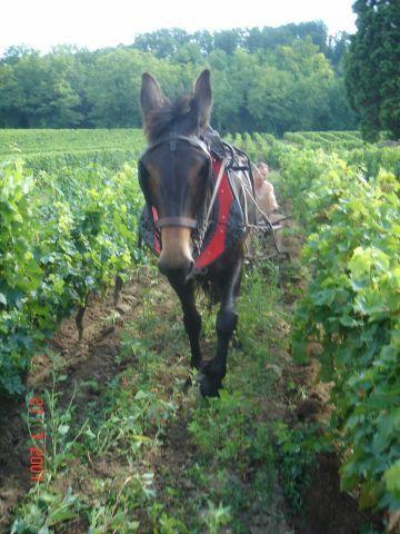 Sabine a partagé cette rando avec nous.et puis aussi Henri .Mario a décavillonné la vigne comme s'il avait fait cela depuis sa prime jeunesse.Et Yolande a pris une photo homérique