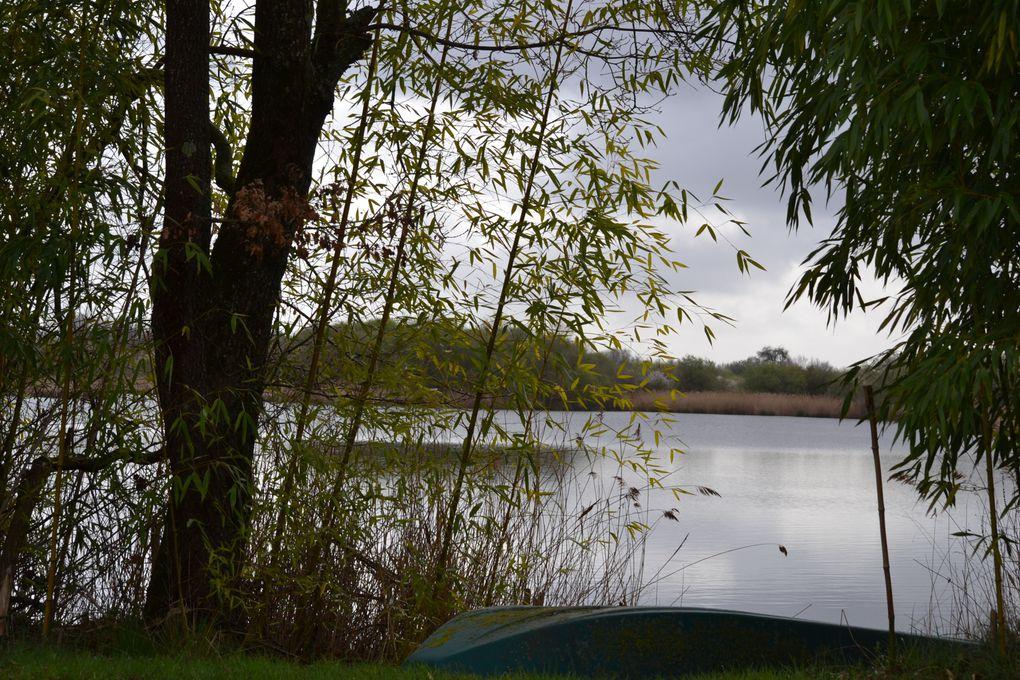 Un spectacle nature dans un beau pays ou les oiseaux sont des images .Découverte des habitats des zones humides dans cette mosaïque d'étangs:la Brenne tient ses promesses.