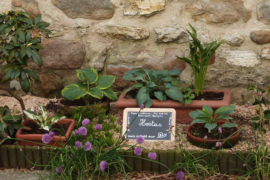 Album - massifs, amenagements paysagers et petits bricolages du jardin du chat vert