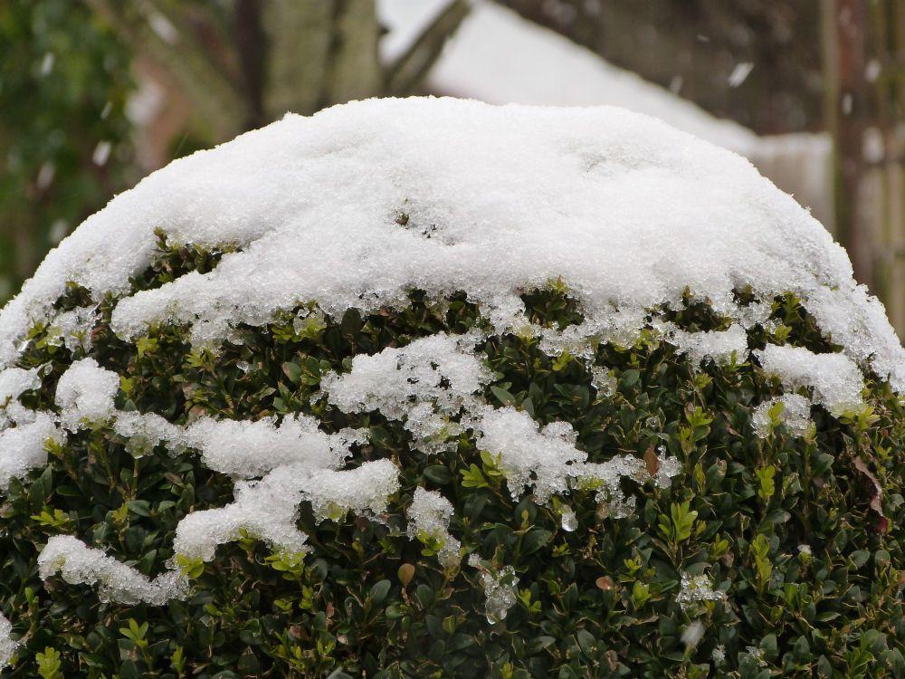 Album - Le chat vert en hiver