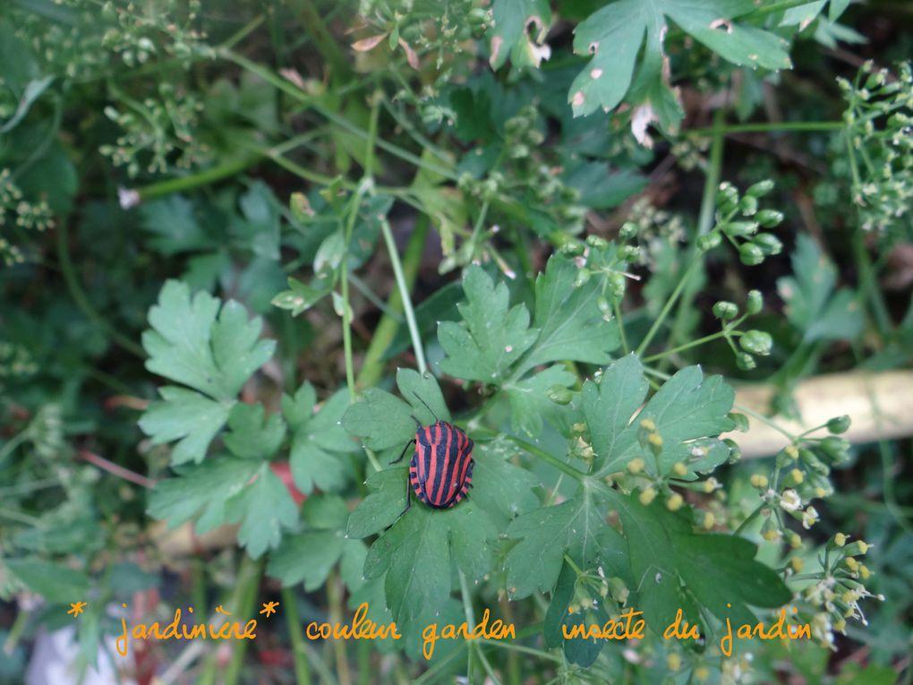 bonjour,quelques photos de mes balades,jardin,cuisine etc...