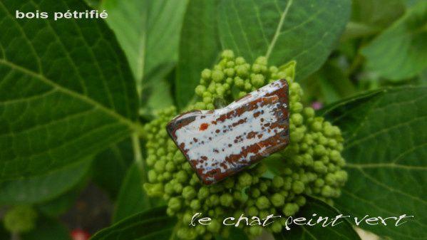 Album - Bois-et-corail-fossiles et perles